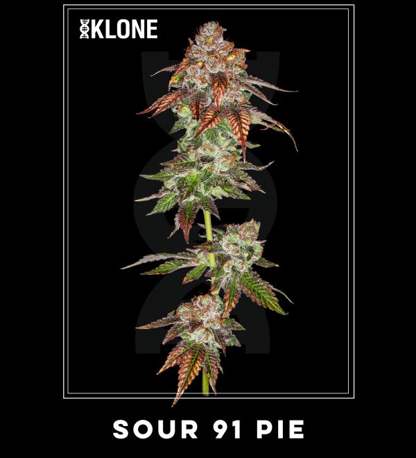 Sour91 Pie #3