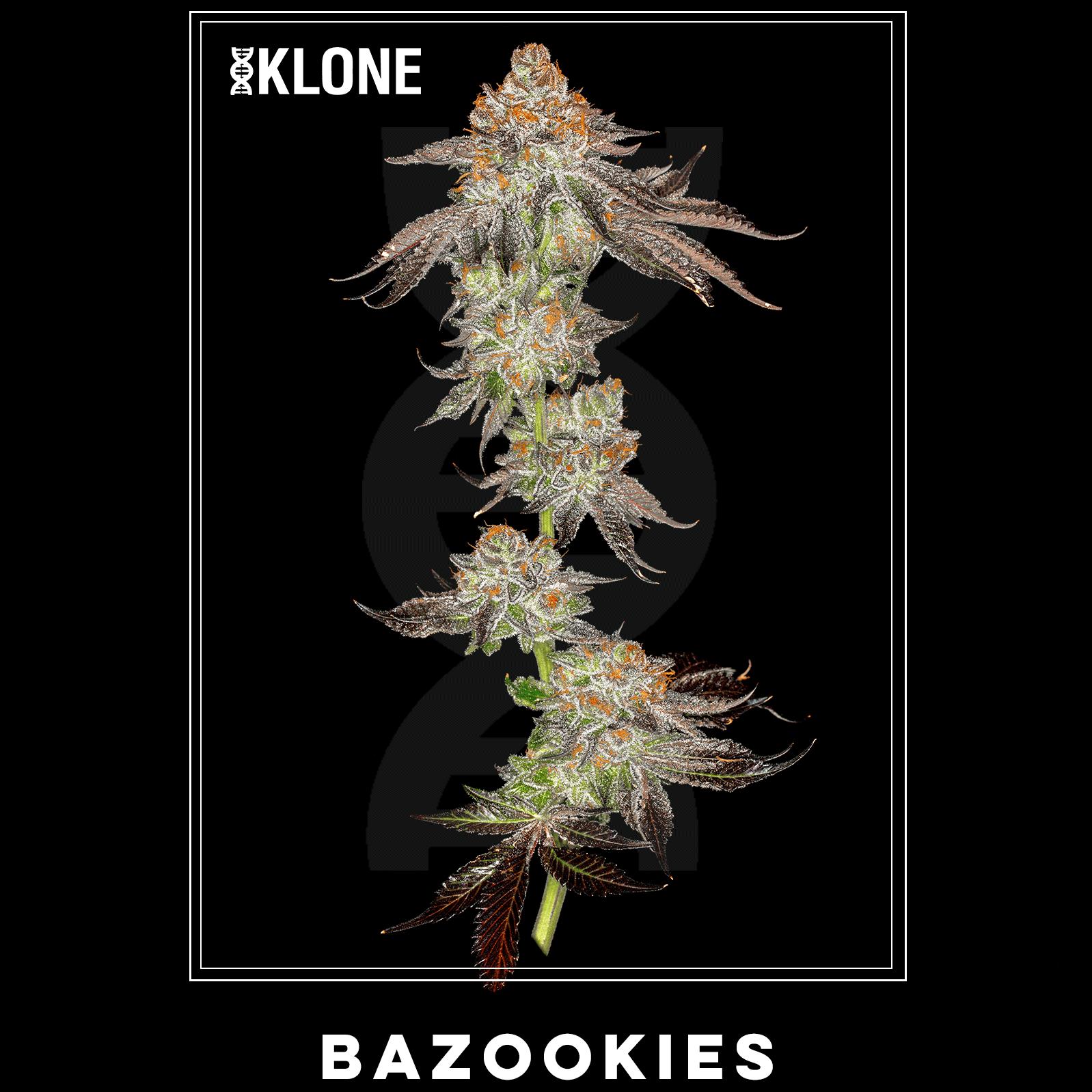 Bazookies #10