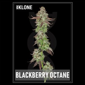 Blackberry Octane