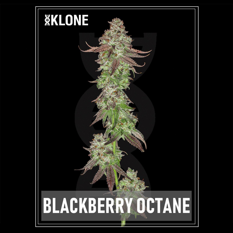Blackberry Octane