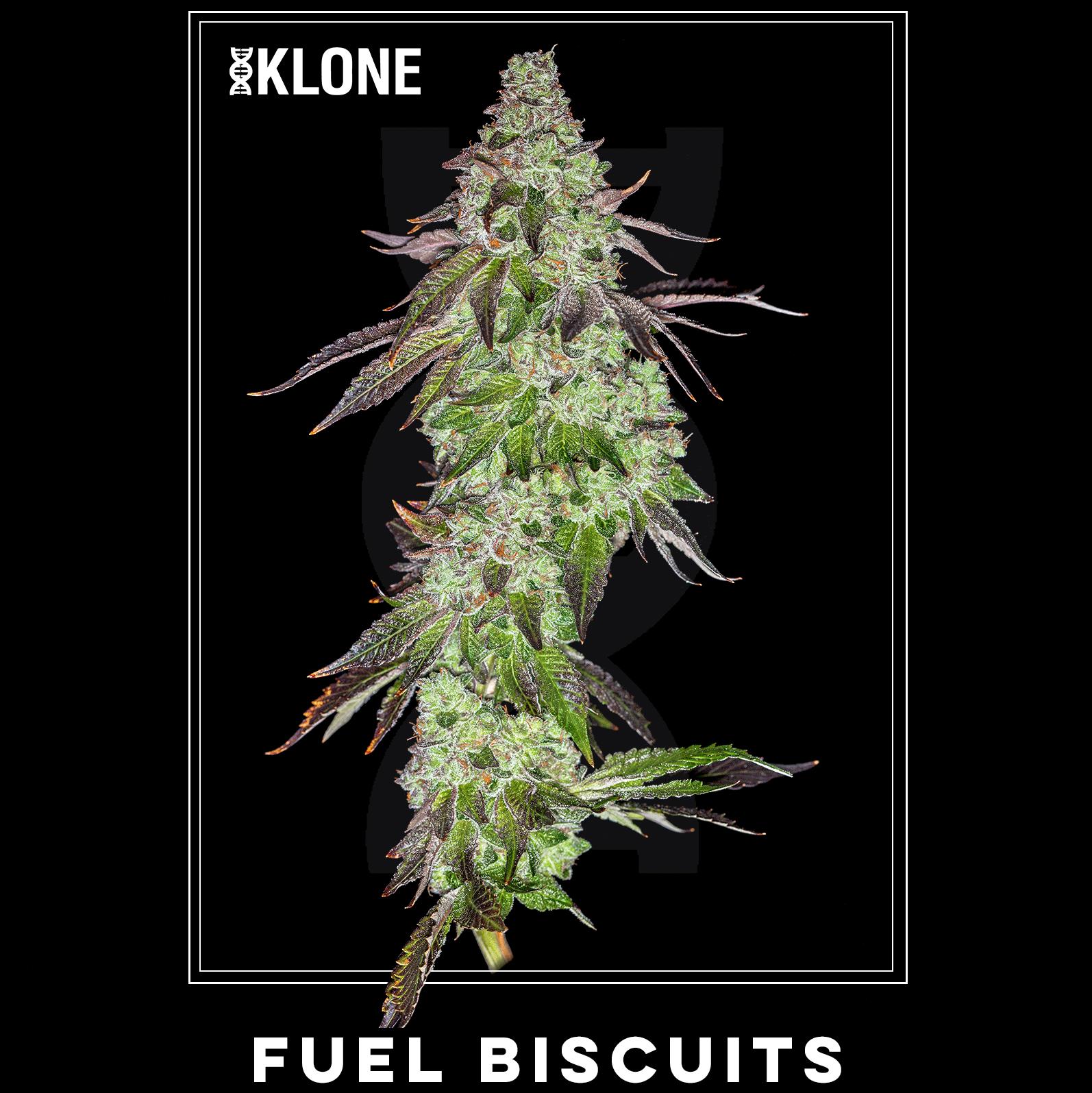 Fuel Biscuits