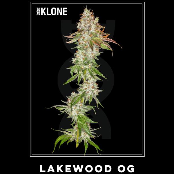 Lakewood OG