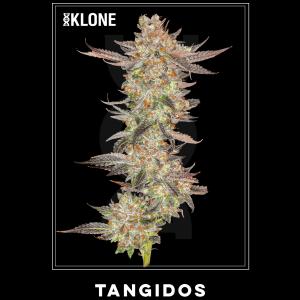 Tangidos #13