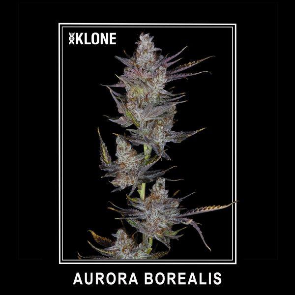 Aurora Borealis #7