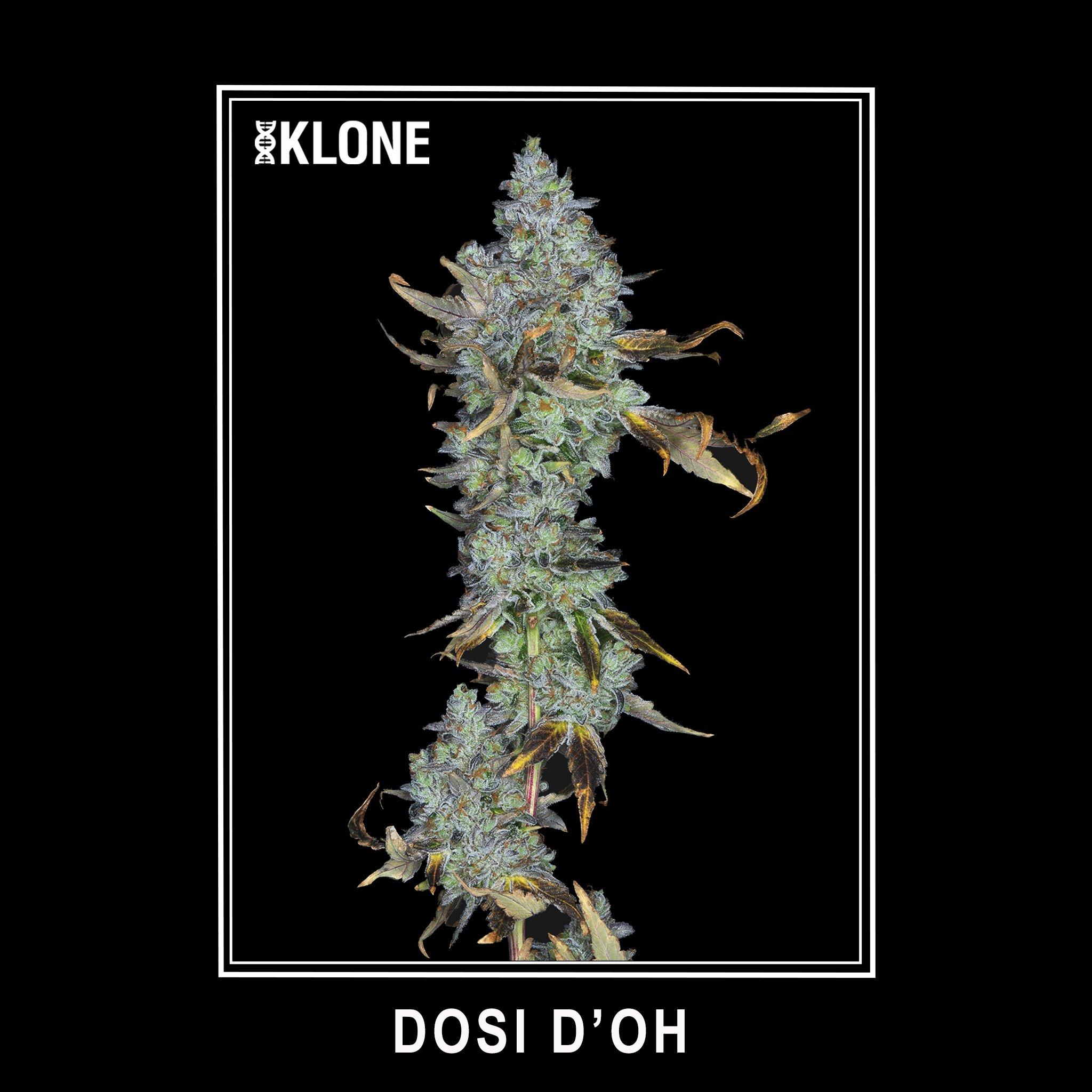 Dosi Do'h