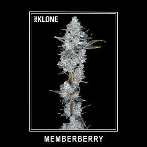 Memberberry #3