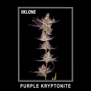Purple Kryptonite