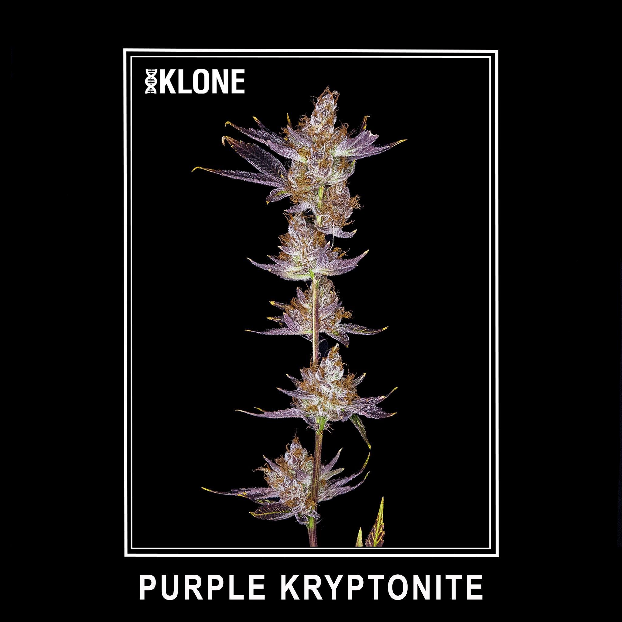 Purple Kryptonite