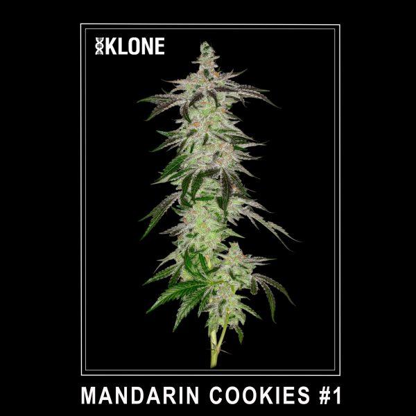 Mandarin Cookies #1