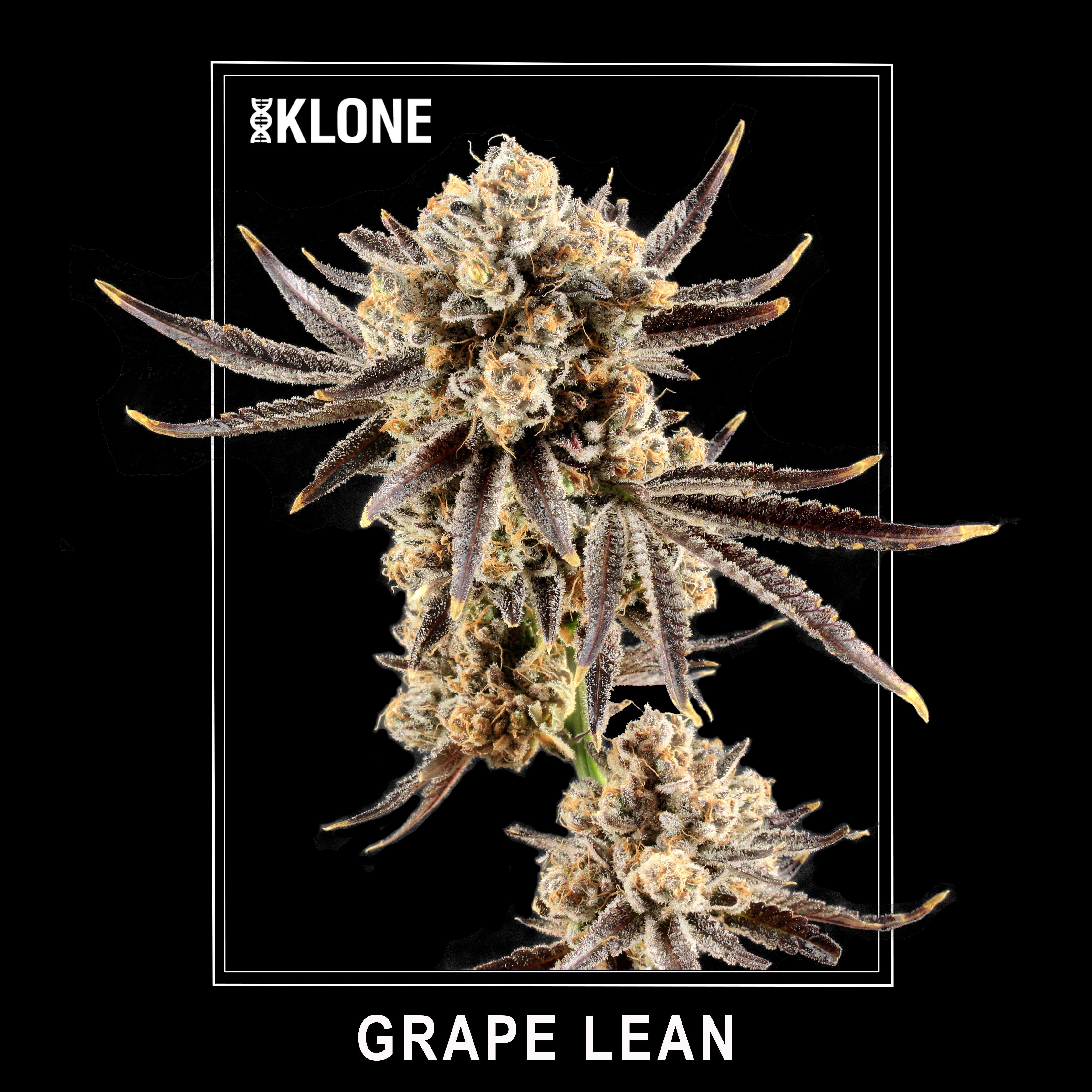 Grape Lean